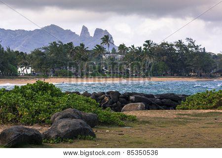Coconut Palm tree on the sandy beach in Hawaii Kauai poster