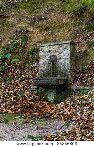 Fountain In The Wood
