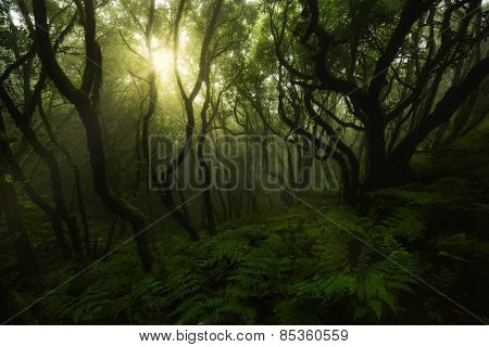 Enchanted Green Forest