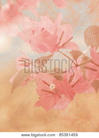 Bougainvillea with soft vintage oil painting texture - flower background poster