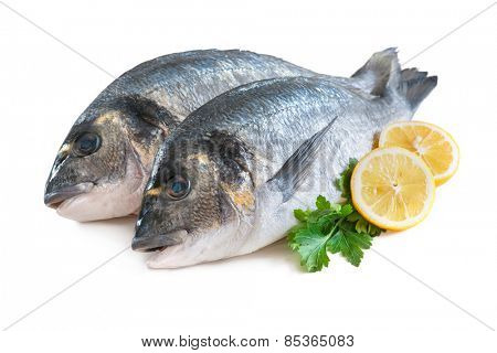 Some of Gilthead sea breams isolated on white background