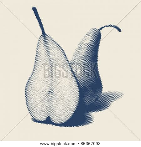 Vector engraved style one color illustration, pears apart in fallingout