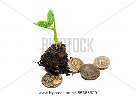 The Plant Grows From A Pile Of Soil And Coins On A White Background