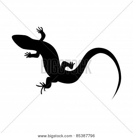 Monochrome Lizard
