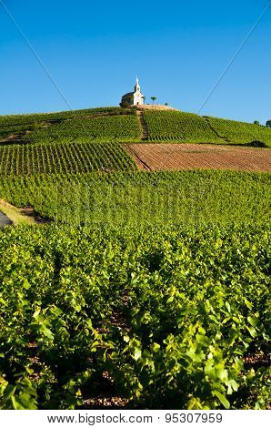 Hill Of Fleurie Village, Beaujolais, France