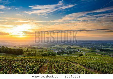 Sunrise At Beaujolais Vineyard