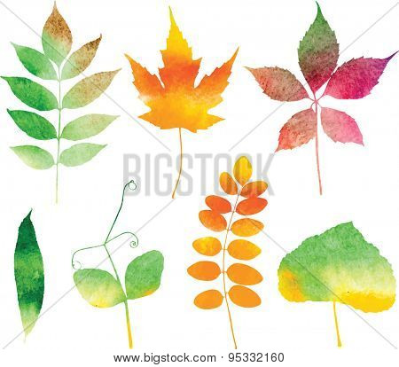 Watercolor autumn leaf collection. Vector illustration