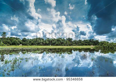 Wetlands in Pantanal, South America, Brazil