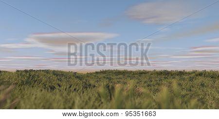 praire grass field