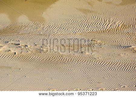 Dunes on the Curonian Spit