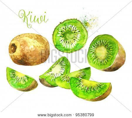 Whole Kiwi Fruit and his Sliced Segments  Isolated on White Background. Watercolor Vector Illustration.