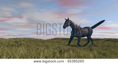 black horse alluring in praire
