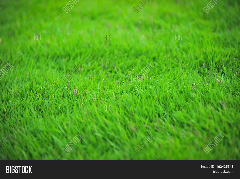 green grass football field. Green Lawn, Football Field,golf Field Soft Selective Focus Grass F