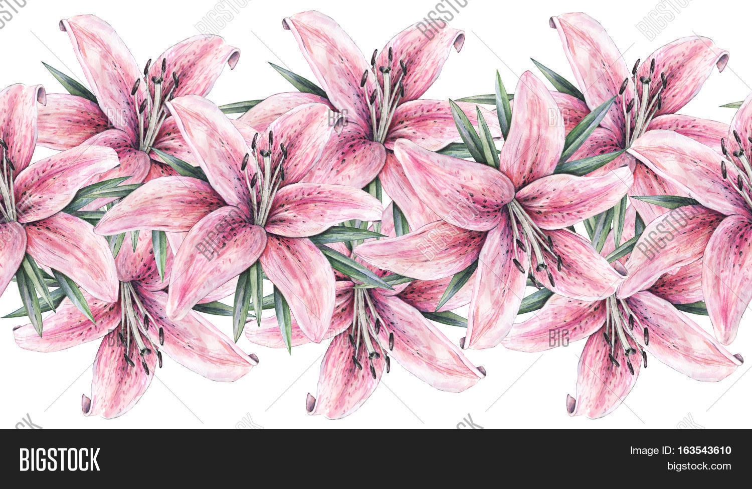 Pink lily flowers image photo free trial bigstock pink lily flowers isolated on white background watercolor handwork illustration drawing of blooming lily izmirmasajfo