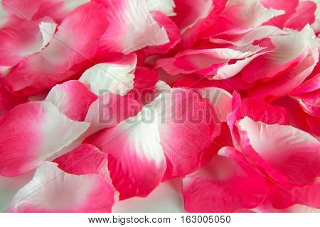 Artificial rose petals  on a white background