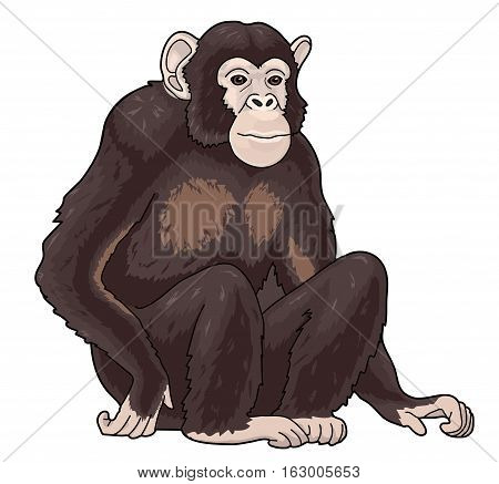 The big brown monkey sits on the white background.