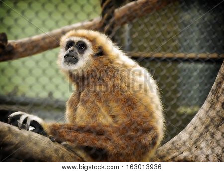 This is a photo of a monkey.