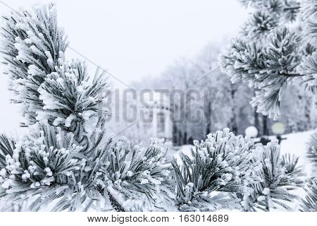 Winter season at Russian city Yaroslavl. Pine branches with needles covered by frost on foreground. Gazebo and snow-covered slope of the embankment on background. Focus on foreground pine needles.