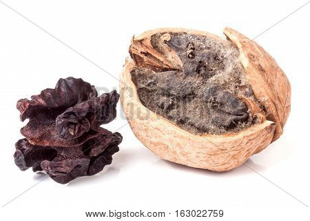two spoiled walnuts with mold isolated on white background closeup.