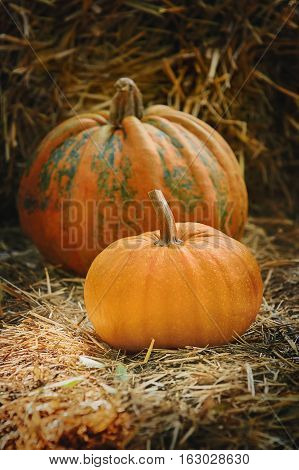 Image of Two Ripe Pumpkins on a Hay