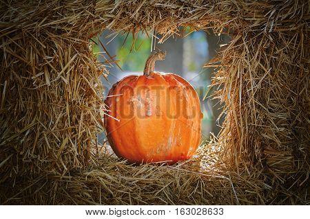 poster of Ripe Yellow Pumpkin in a Hay Window