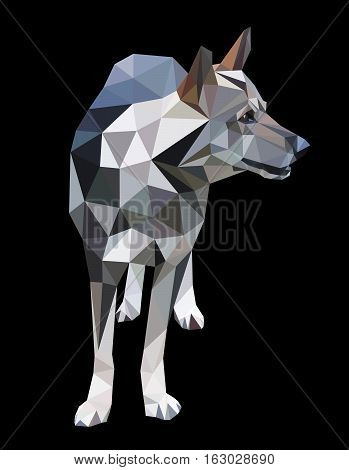 Mongrel a wolf a dog in a polygon style. Fashion illustration of the trend in style on black background. A dangerous predator