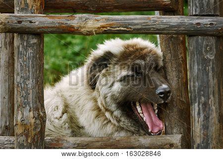 Dog Near The Ladder