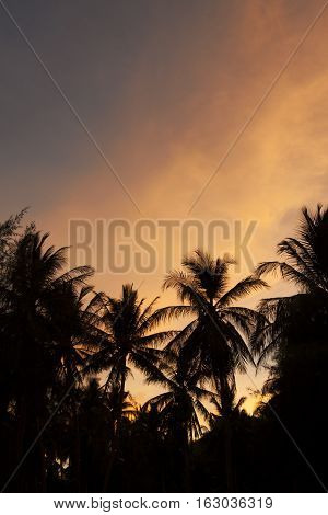 Coconut tree The beachside during the evening