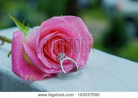Pink rose and wedding ring Rose Wedding rings