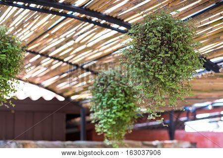 Plant pot on ceiling Interior and exterior decoration