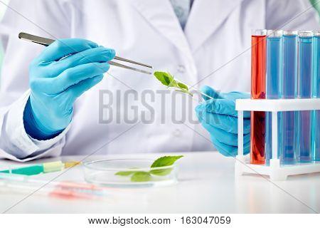 Scientist putting green leaf into a specimen holder