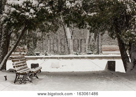 Live arch with trees in the snowy winter park. Empty bench