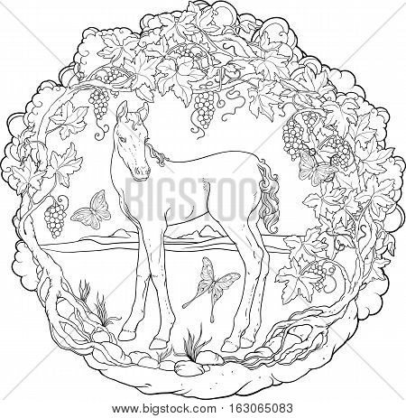 Filly in a garden with butterflies . Coloring page.