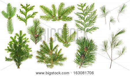 Set of evergreen coniferous tree branches isolated on white background. Spruce pine cypress fir