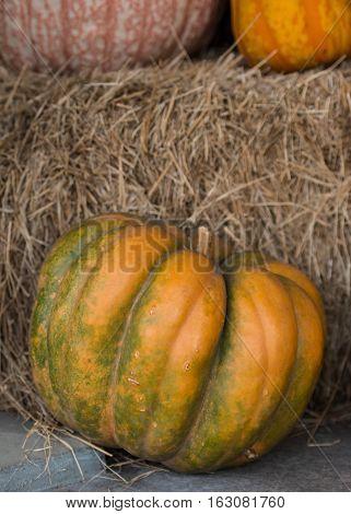 Heirloom Pumpkin Leaning Against Stacked Hay Bales