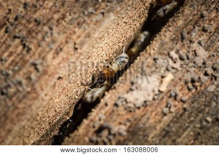 Termites eat wood decay Which are fractures of wood. With debris caused by termites eat wood. In poor lighting conditions
