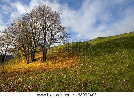 autumn landscape with yellow leaves and trees