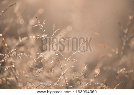 Beautiful Spiderweb With Dew Drops