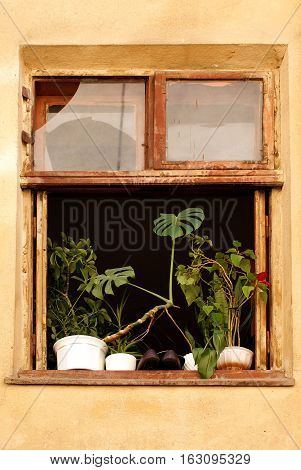 Window of old house with flowerpots and shoes