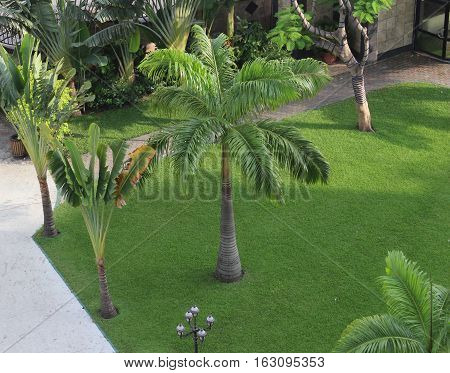 Top view of a tropical park with mown grass and palm trees