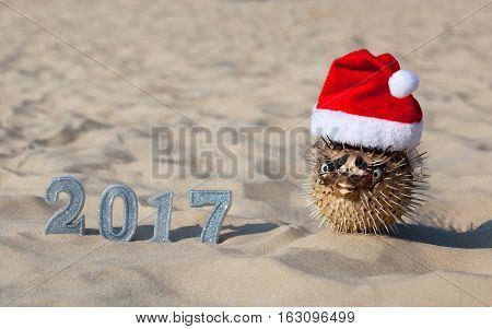 On the beach in the sand are the numbers of new 2017 and lies next to fugu fish which is wearing a Santa Claus hat. New Year Celebration and Christmas in the ocean the sea. Traveling.