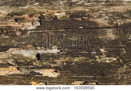 Background of rustic wooden planks natural background boards of wood. Brown colour. Old cracked split wood. Nice rough texture. Plenty of copy space for text or picture.