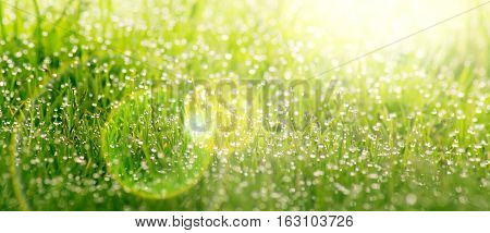 Background of dew drops on bright green grass on a sunny day.