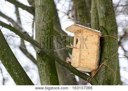 Nesting box. Wooden house for birds on a tree.