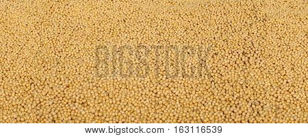 Agriculture, Soybean Harvest
