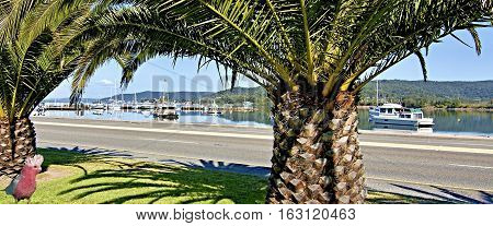 Scenic waterfront landscape with Palm Trees & boats. Brisbane Water Gosford New South Wales Australia.