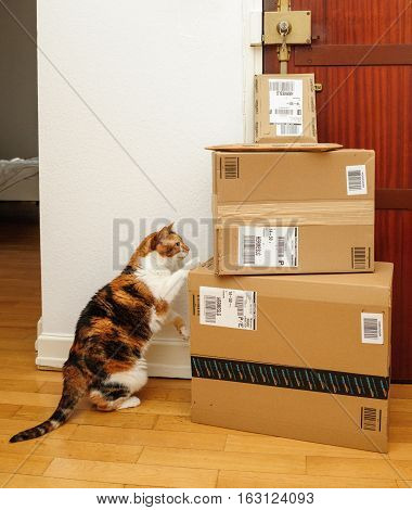 PARIS FRANCE - SEP 4 2016: Curious cat inspecting multiple Amazon Prime boxes delivered by courier and left by the door by Hermes delivery courier