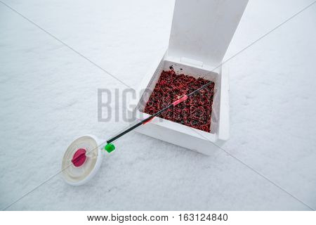 bloodworms is common life food for fish and live-bait for fishing
