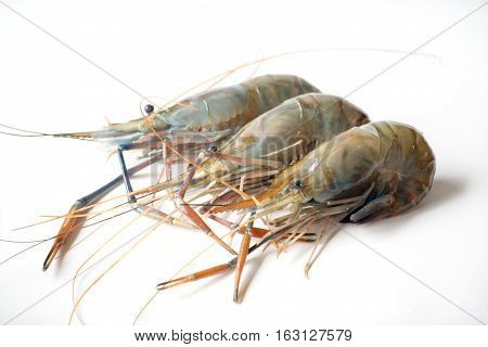 Raw shrimp Giant freshwater prawn Fresh shrimp on white background
