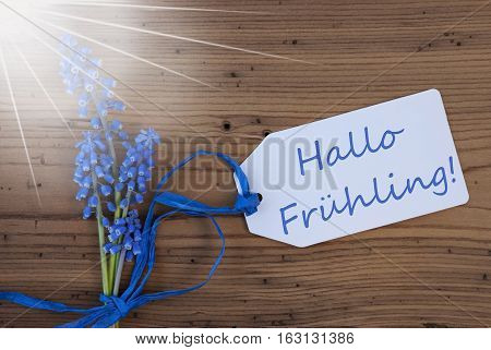 Label With German Text Hallo Fruehling Means Hello Spring. Sunny Blue Spring Grape Hyacinth With Ribbon. Aged, Rustic Wodden Background. Greeting Card For Spring Season
